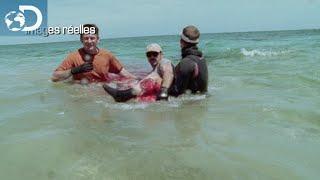 Une attaque sous l'oeil des caméras : Le Mois des Requins