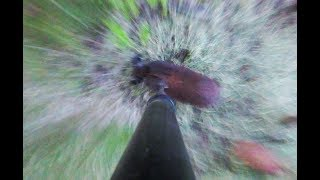 I Speared A Wild Boar And Then An Elk!!