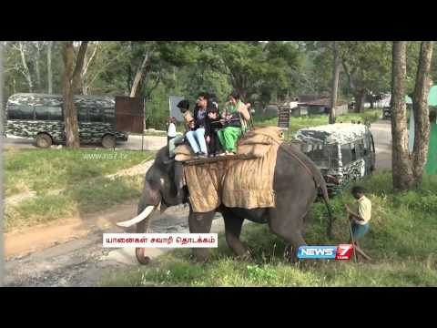 Elephant Safari Resumes in Mudumalai Wildlife Sanctuary