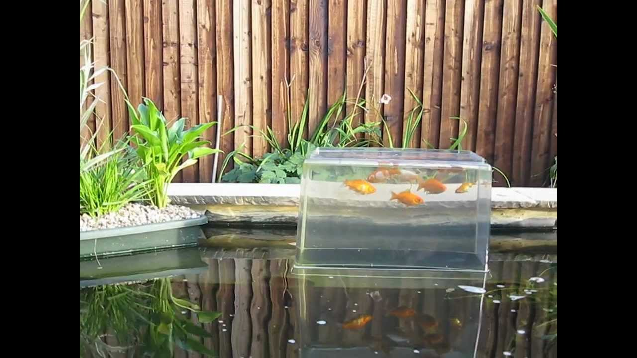 New pond with water feature and goldfish tower youtube for Building a goldfish pond
