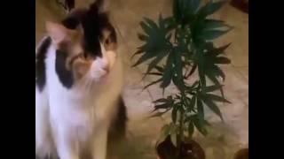 У кота кайфовый аппетит