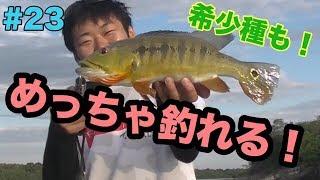 #23【ベネズエラ】絶対見て!一番見てほしい魚が釣れた!