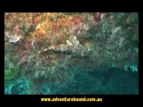 Adventure Bound - SCUBA dive at Norfolk Island