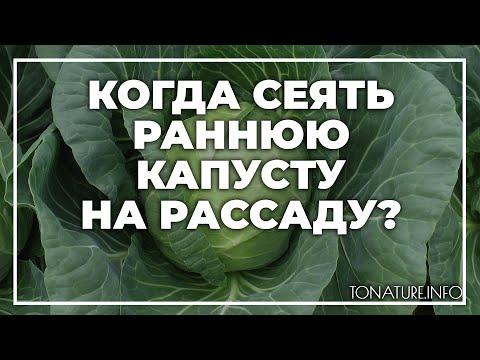 Когда сеять раннюю капусту на рассаду? | toNature.Info