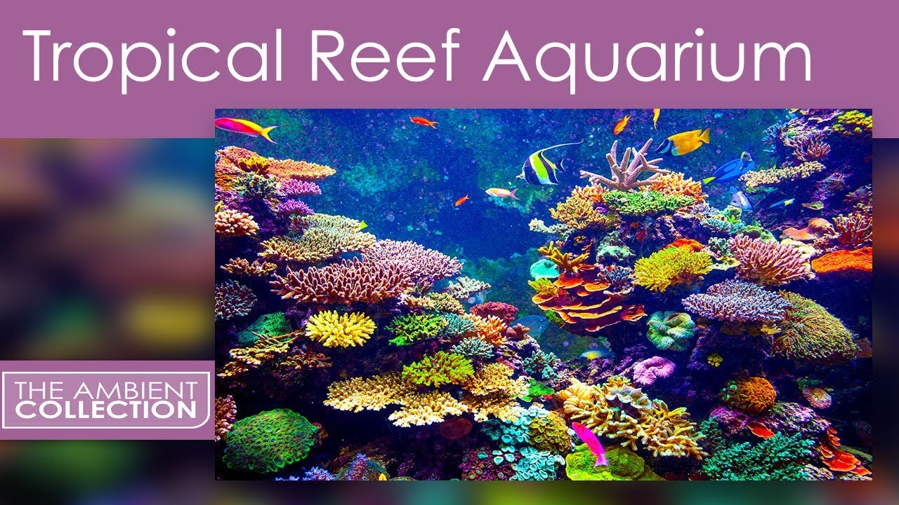 Fish Tank 3d Live Wallpaper For Pc Aquarium Dvd Tropical Reef Aquarium Filmed In Hd