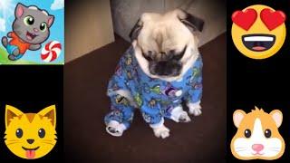 TOP Videos Talking Pets Funny Animals P3