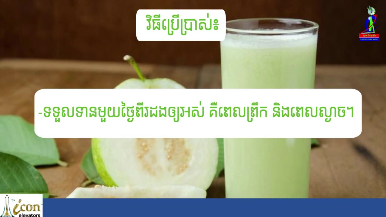 How to make Guava juice that benefits the health and beauty(វិធីធ្វើទឹកត្របែកដែលផ្តល់អត្ថប្រយោជន៍)