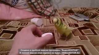 Попугай и витамины