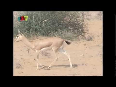 Rajasthan Wildlife by Rooms and Menus