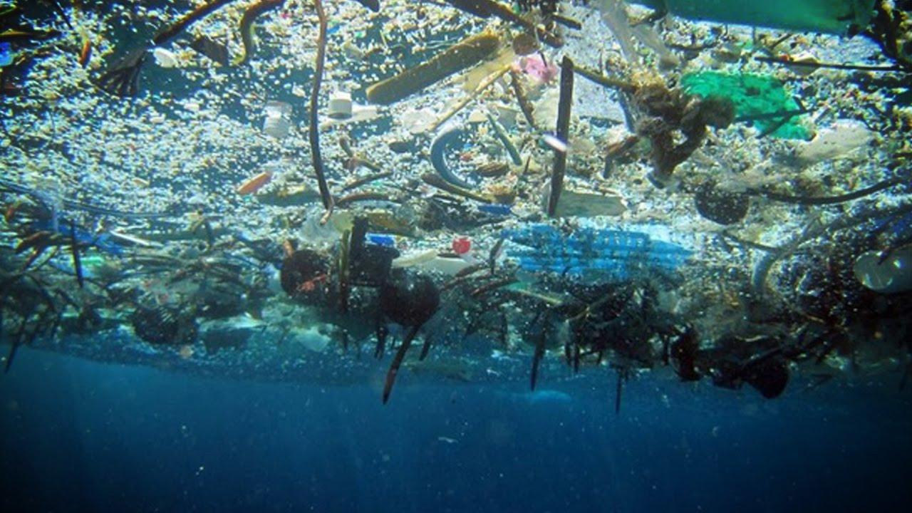 Hawaiian Monk Seal Ocean Plastic