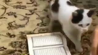 Sübhanallah allahı kuranı bilen kurana ayak basmayan kedi dikkatle izleyin YENİ