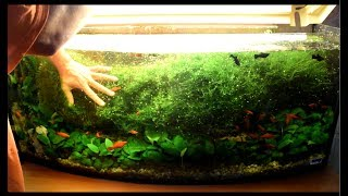 мох, прополка аквариума