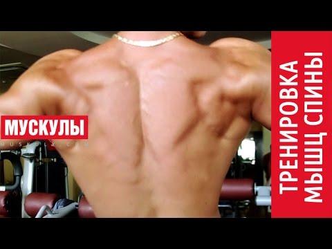 Как накачать МЫШЦЫ СПИНЫ? Комплекс упражнений для мышц спины.