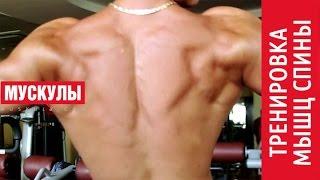 видео упражнения для мышц спины