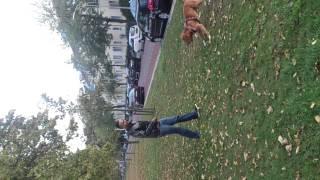 Dogue De Bordeaux Mix American Stafford Jumping