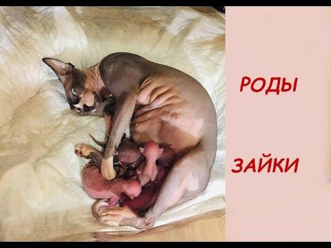 РОДЫ КОШКИ ЗАЙКИ. Слабонервным НЕ СМОТРЕТЬ!!!