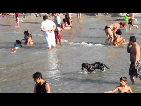 Playa de perros en valencia pinedo from YouTube · Duration:  2 minutes 9 seconds