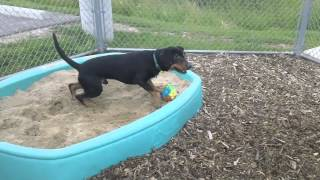 Dozer, A 3.5 Year Old Rottweiler/coonhound Mix Available For Adoption At The Whs