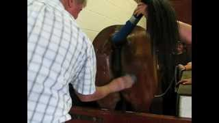 Repeat youtube video Thoroughbreds Breeding - Edited Version