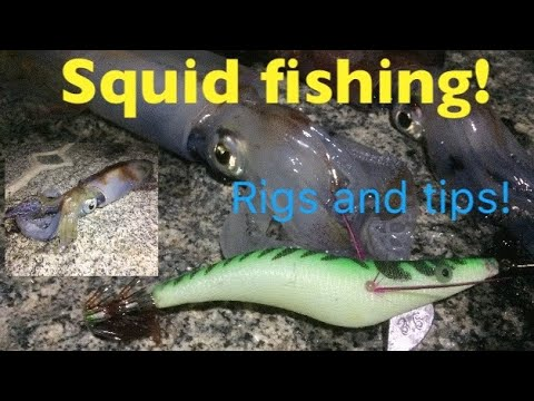 SQUID FISHING! Rigs, Tips And Tactics!