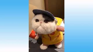 🤣 Funniest 😻Cats And 🐶 Dogs - Try Not To Laugh - Best Of The Pet Animals Life Videos