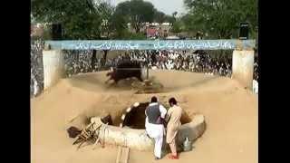 Akhara chakmal ladi group