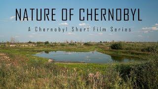 Nature Of Chernobyl   CHERNOBYL 2019