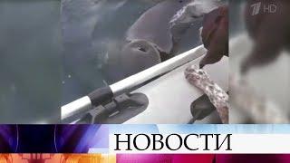 В Приморье к лодке с туристами неожиданно подплыли косатки.