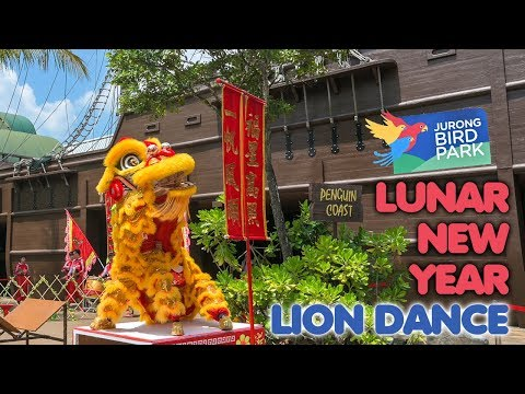 Majestic Lion Dance At Jurong Bird Park