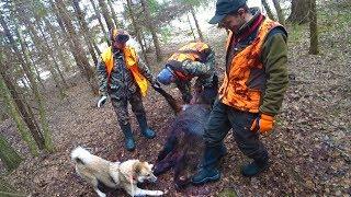 Охота #227 загонная на кабана