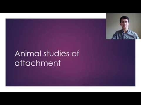 Attachment animal studies