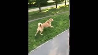Подготовка собак к охотничьему сезону. bushking.ru