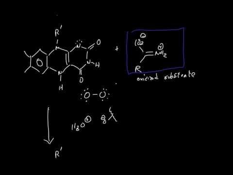 DAAO (D-amino acid oxidase) Mechanism