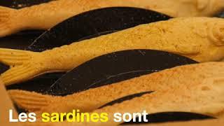 Des sablés marseillais en forme de Sardine