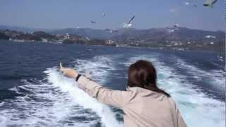 カモメの餌付け(真鶴半島遊覧船)