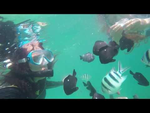 Looc Romblon - Snorkeling at Looc Fish Santuary