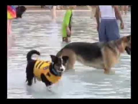 Athens Showcase: Nelsonville Dog Swim  9-10-16