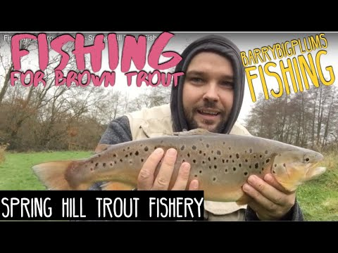 Fishing For Brown Trout - Spring Hill Trout Fishery
