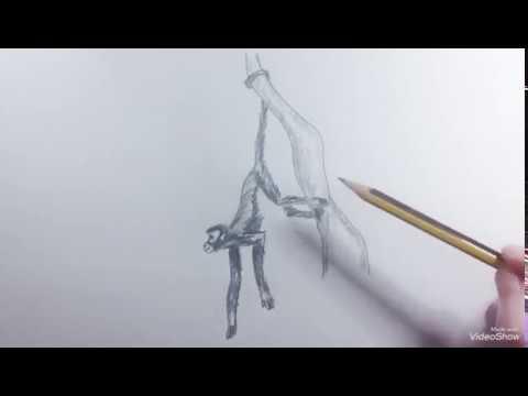 How To Draw An Spider Monkey Como Dibujar Un Mono Araña