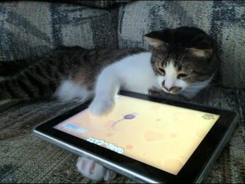 Aksi Kucing Comel Bermain iPad