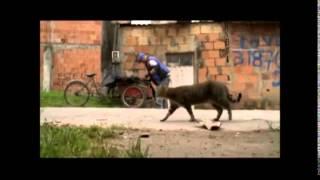 Proyecto de video del Colegio General Gustavo Rojas Pinilla IED