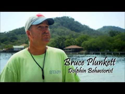 Interact with Wildlife - Volunteer Honduras