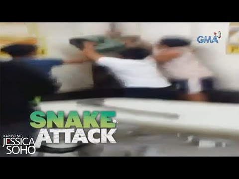 Kapuso Mo, Jessica Soho: Snake attack sa Biliran