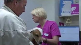 Erno-koira hammaslääkärillä Evidensiassa