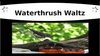 The Waterthrush Waltz (Talking Rock, GA)