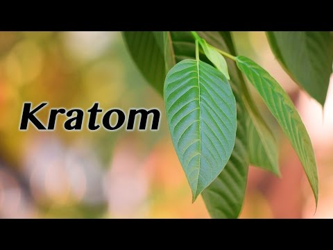 Mitragyna Speciosa Common Name Order