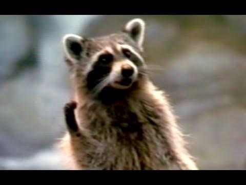 Dr Dolittle 2 Trailer 2001 Youtube