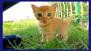 恐る恐る出てきてカメラに触ろうとする子猫が可愛過ぎる