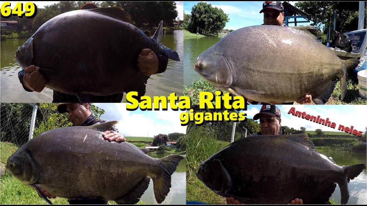 Os grandes TAMBAS do Pesqueiro Santa Rita na antena e no diretinho - Programa Fishingtur na TV 649