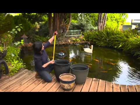 The Garden Gurus - Selecting the right water plant for your pond